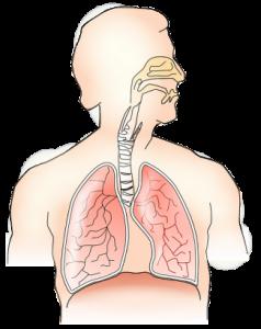 Werking-van-de-longen